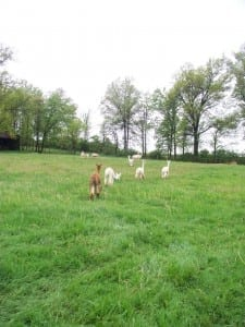 More Exploring in the Pasture