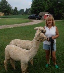 Alpacas Trusting