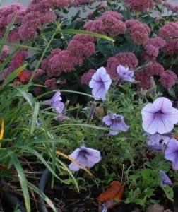 More Flowers at Alpaca Meadows