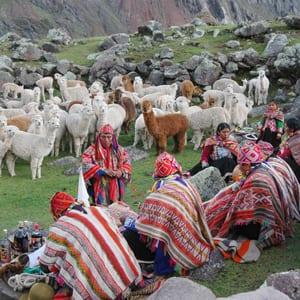 Blessing of the Alpacas - Alpaca News